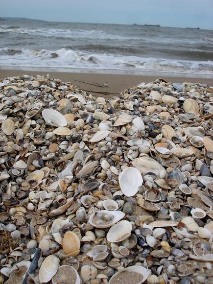 Азовское море. Ракушки